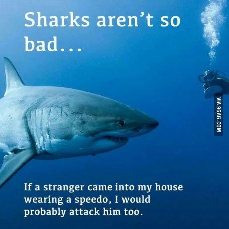 Image result for sharks are misunderstood meme