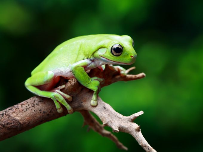 A traveling frog exposes the fake app problem in Apples Chinese App Store