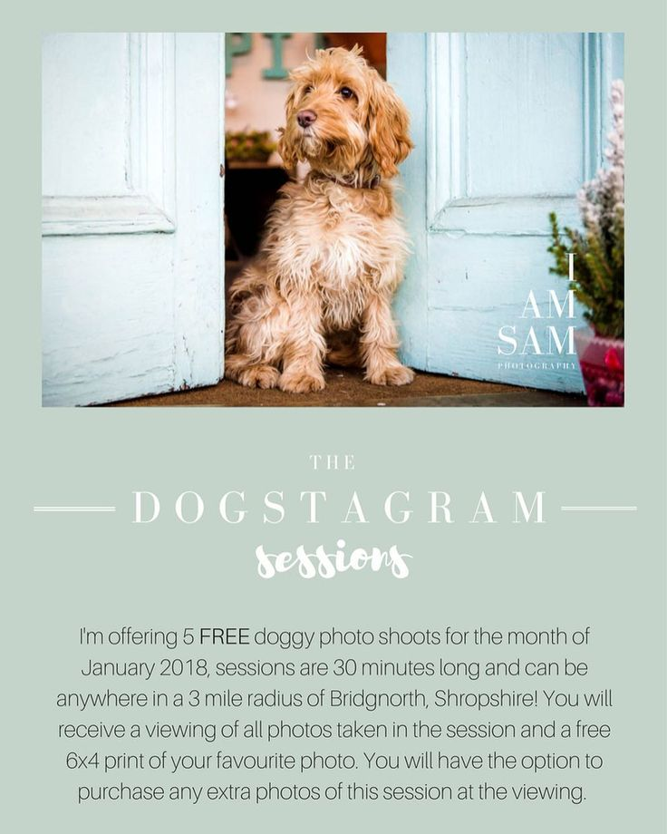 I'm offering 5 FREE doggy portrait sessions this January - please send an email to sam@iamsamphotography to register your interest and get more information.  First come first served and remember there's only 5 FREE sessions available.  WOOF.      #dogstagram #doggystlye #doglovers #dogmodel #photoshoot #photography #pets #bridgnorth #shropshire #shropshirelife