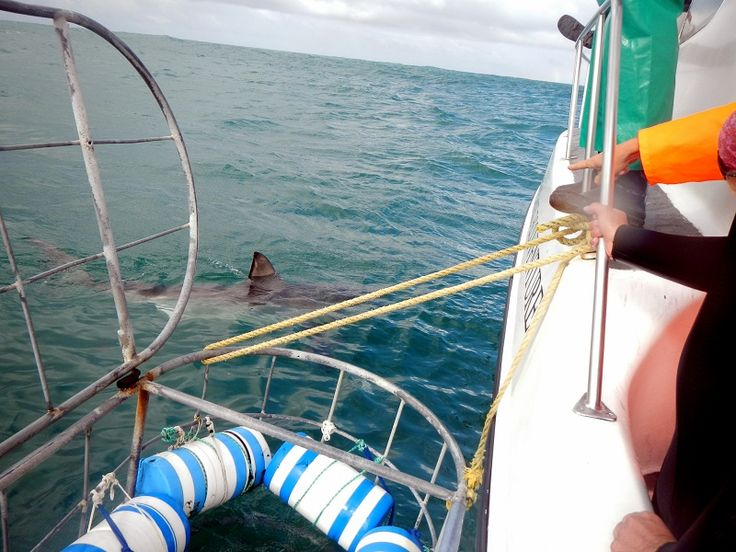 Perspective is everything.   #Shark cage diving in #SouthAfrica - September of 2012