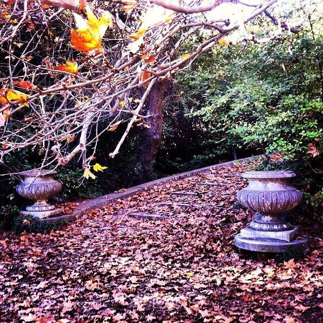 #autumn #leaves #landscape