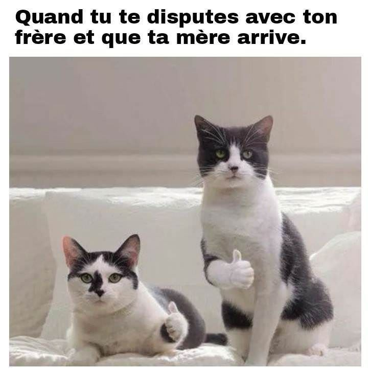 Quand tu te dispute avec ton frère et que ta mère arrive !!! monchatdore.c… #memes #jokes #sillyjokes