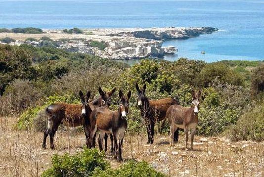 Wild Donkeys in North Cyprus.