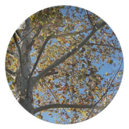 Sycamore tree in the fall against a blue sky dinner plate - fall decor diy customize special cyo