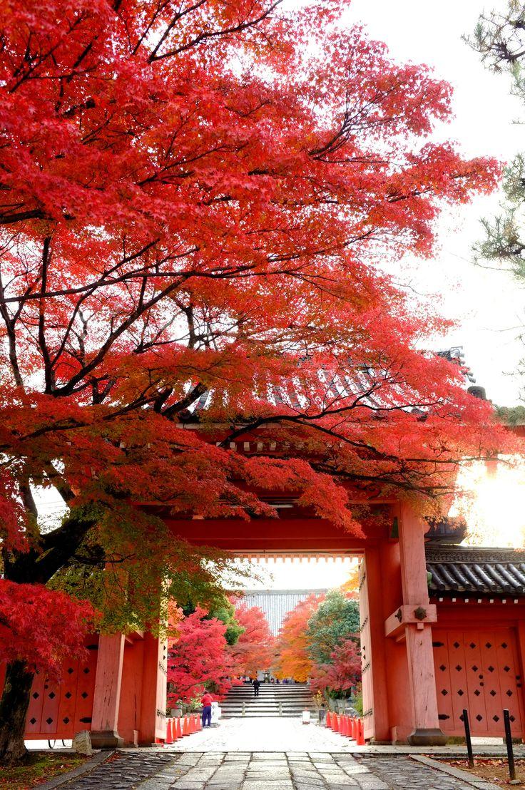 Fall in Shinso Gokuraku-ji (Shinnyo-do) Temple, Kyoto Japan.