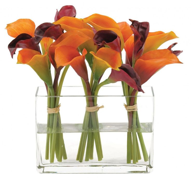 Bloomingmore farm-direct mini calla lilies are sustainably grown in Ecuador and Colombia and add a touch of class and sophistication to luxurious events. Our lilies are perfect for weddings and may be