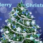 http://youthsclub.com/happy-christmas-wishes-2012-merry-christmas-greetings-sms-on-christmas/  Happy Christmas Wishes 2012 - Merry Christmas Greetings, SMS on Christmas