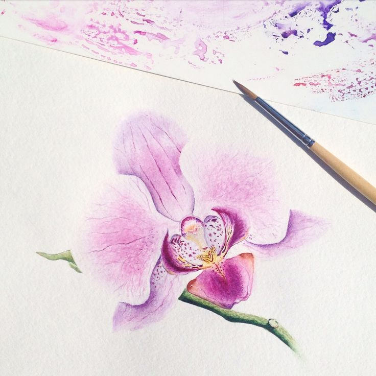 Watercolor orchid...