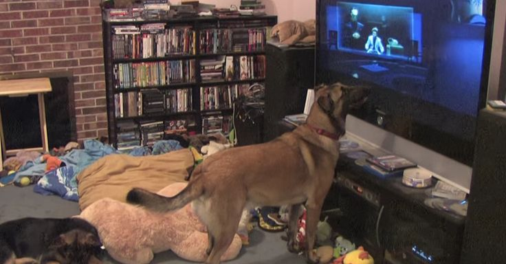 Watch This Overly Excited Dog Freak Out When His Favorite Film Hero Appears via LittleThings.com