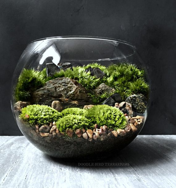 The bio-bowl Forest World terrarium series is comprised of crystal clear, high quality glass bowls showcasing a miniature landscape of ferns,