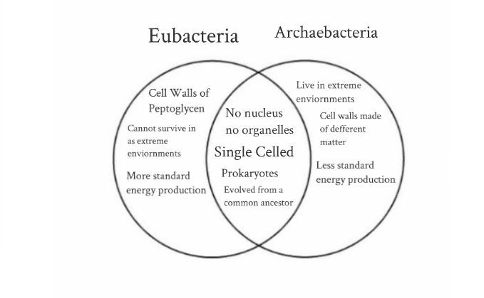 archaea vs bacteria venn diagram