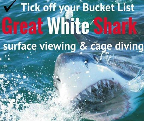 Shark Cage Diving One for the #Bucketlist!