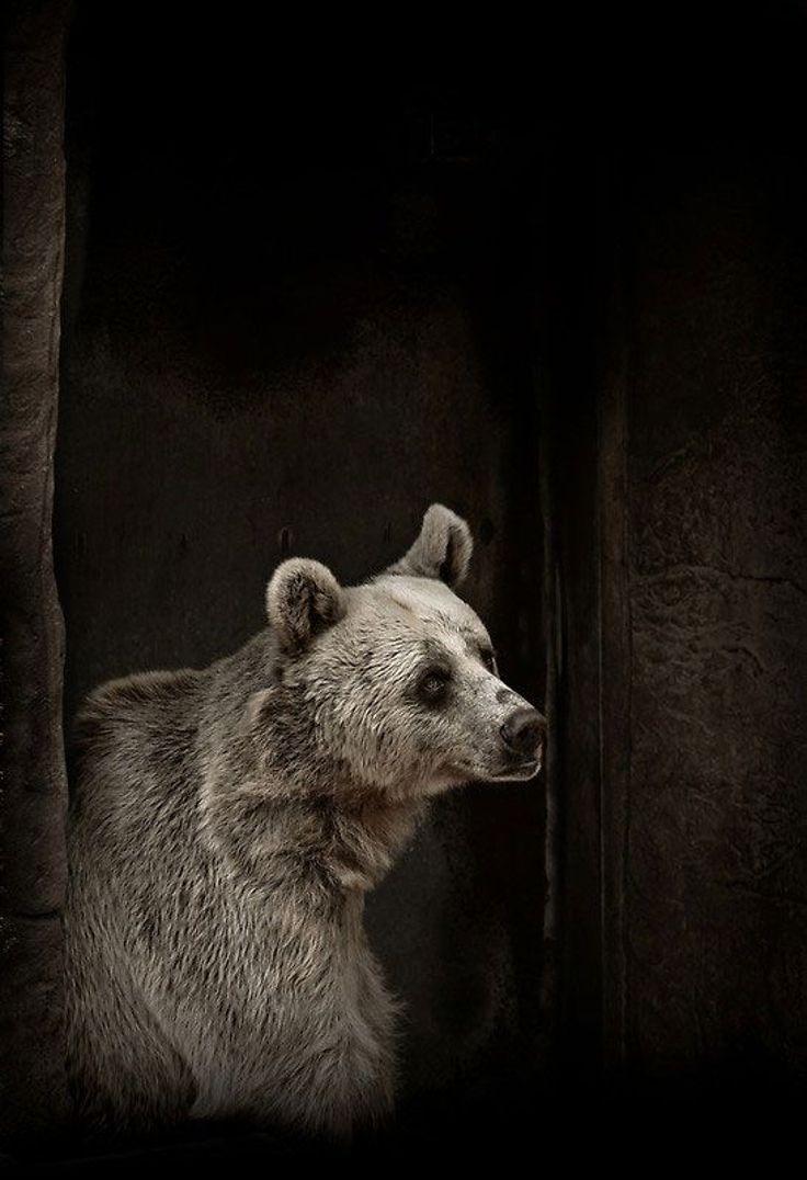 bear By Natalie Manuela
