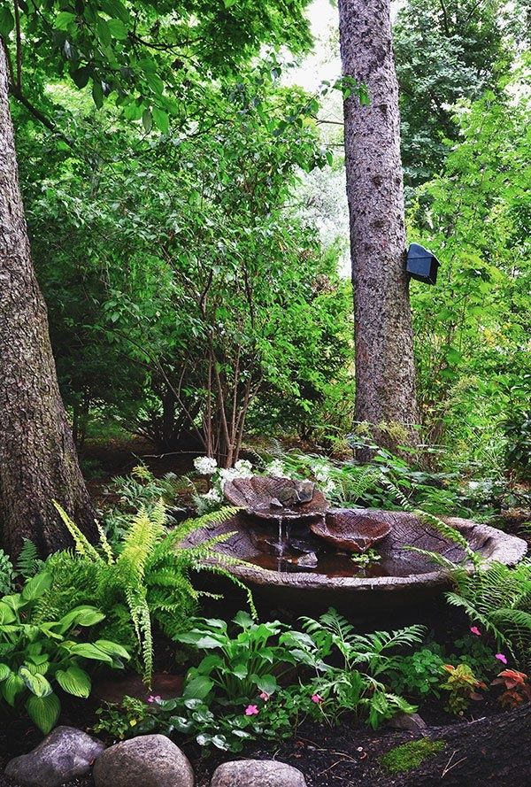 I really like the use of ferns as a border for the water. #gardening