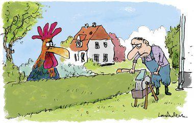 Må du holde hane i haven?