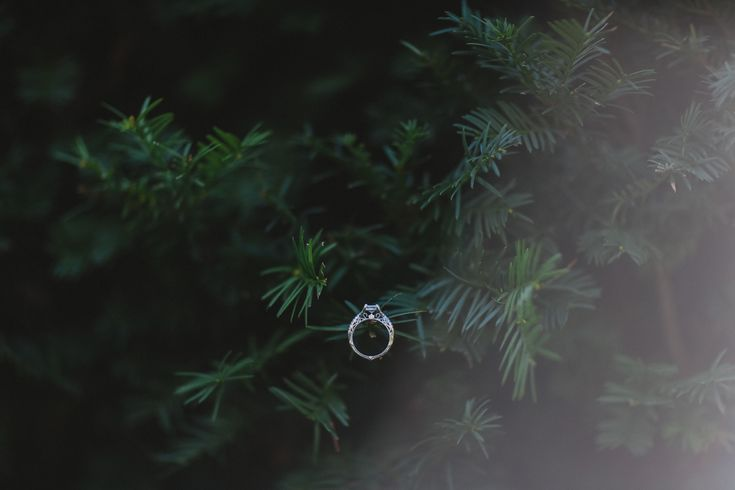Wedding Photography in Windsor Ontario - Wedding Ring Filled with Diamonds - Curescu Photography