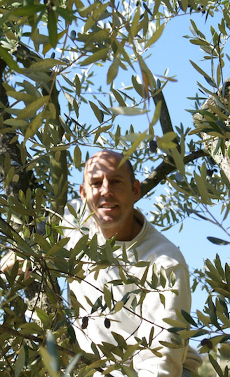 Peter Simmering - real estate broker at ToscanaBolig.dk - enjoyes collecting the olives from his own olive trees.