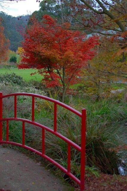 Tasmanian Arboretum  stunning shot by Rose Frankcombe