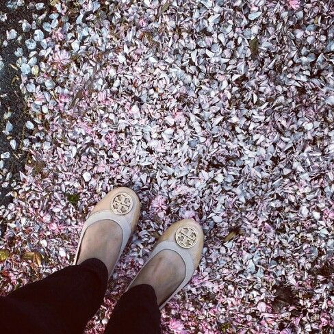 two of my many fave #toryburch #sakura