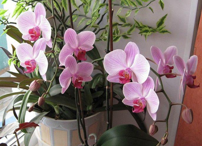 Экстренная реанимация орхидеи! Если взять в руки активированный уголь и… — Копилочка полезных советов