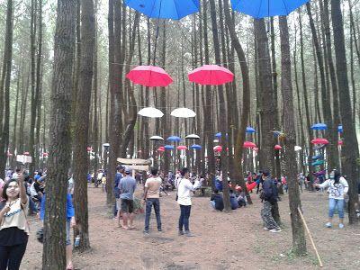 Managament/Research/Trip: Wisata  Alam Baru Hutan Pinus Semeru Desa Arjosari...