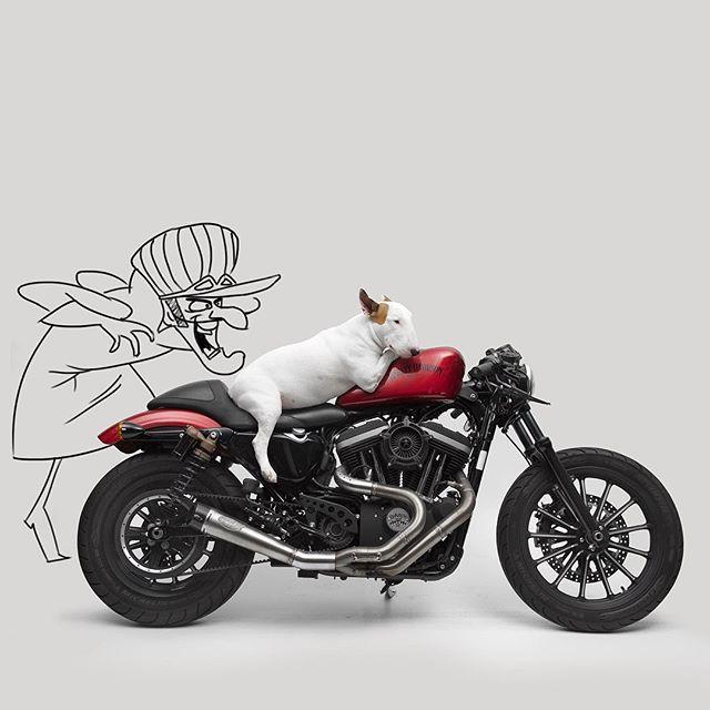 Rafael Mantesso, un publicistaoriginarioen la ciudad de São Paulo en Brasil se ve que comparte grandes momentos de diversiónal lado de subull terrier llamado Jimmylo que lo impulso a crear una…