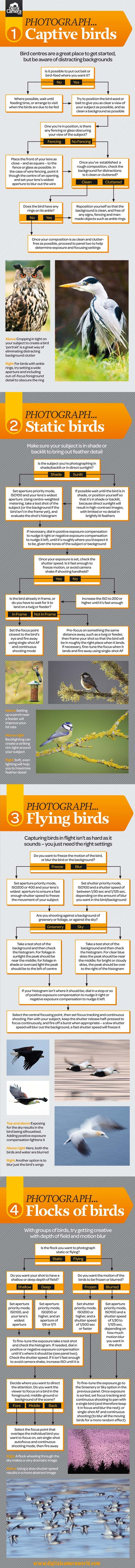 Free bird photography cheat sheet. Drag and drop download shows how to photograph birds in 4 common situations.