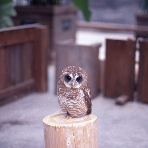 I usually don't pin pictures of cute animals, but Gahhh! This owl...TOO CUTE!