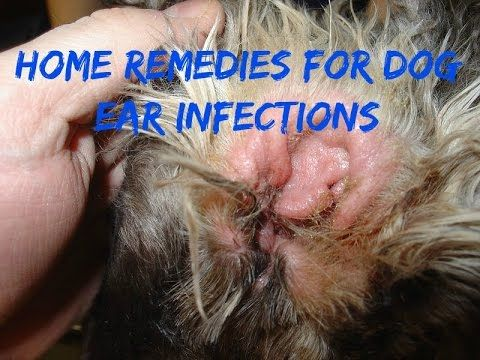 Dog Ear Cleaning Solution Home Remedy