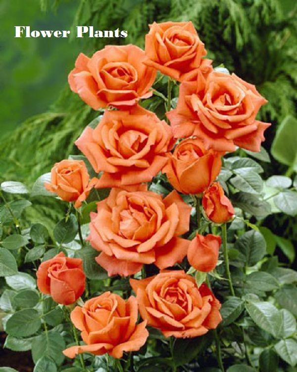 click here for indoor plants httpswwwflowerwyzcom