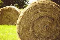Learn to make your own hay for feeding your livestock. (HobbyFarms.com)