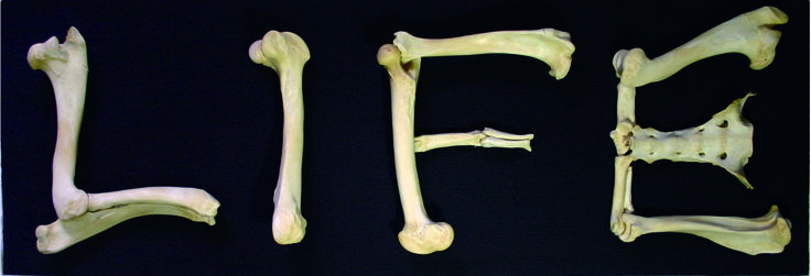 make life with bones as materials.