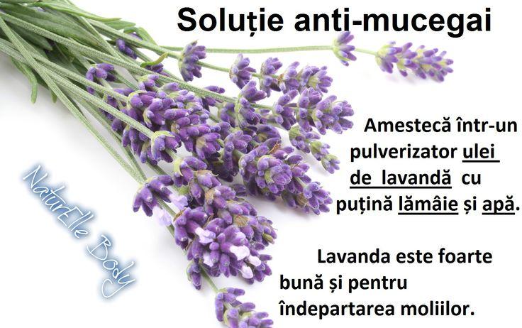 Soluție anti-mucegai
