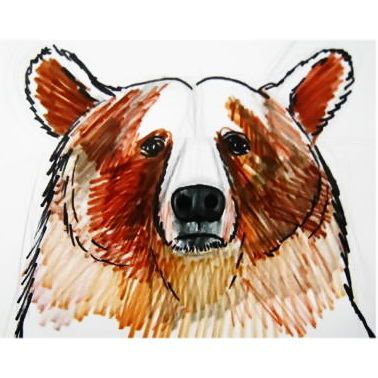 159 best images about Animal Sketching on Pinterest | How ... Bear Face Drawing