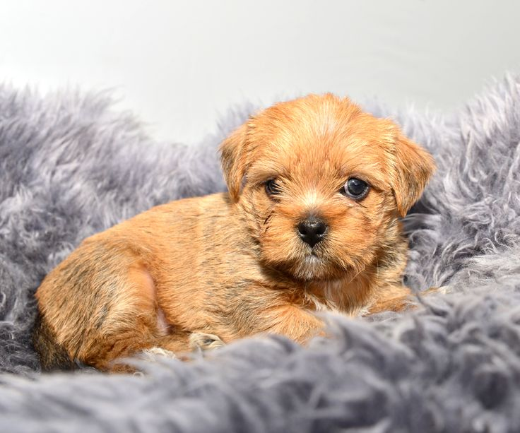 Got the pleasure of photographing this cute puppy today. Only 6 weeks old: D