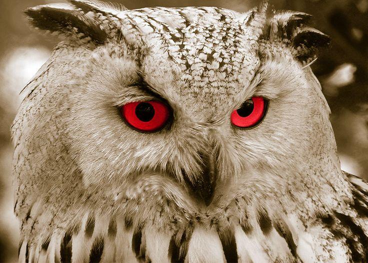 WallArt - Owl - Presentorium