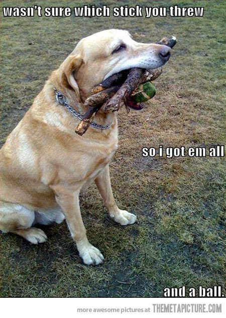 Something our dog Buddy would have done!