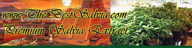 The best place to buy #salvia #online is thebestsalvia.com where you can get all the salvia you need.