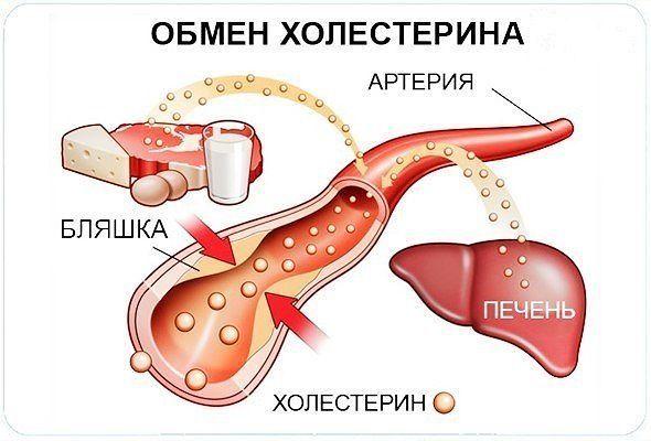 Уровень холестерина можно снизить без проблем! | Женский журнал
