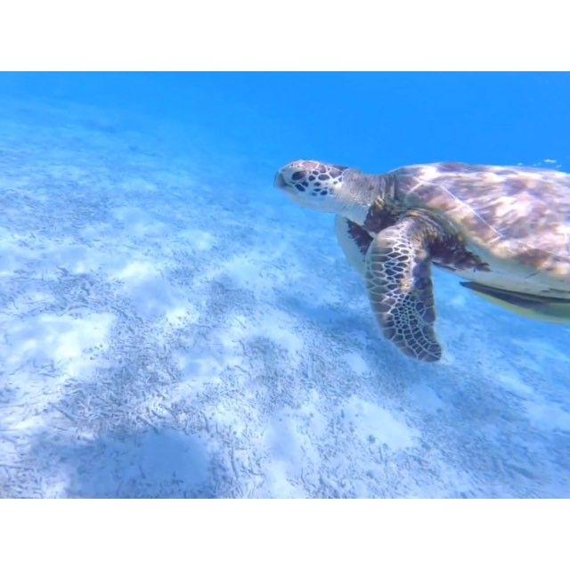 島んちゅNAVI 渡嘉敷島   沖縄離島の観光旅行情報サイト
