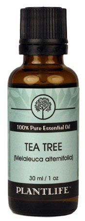 Tea Tree 100% Pure Essential Oil - 30 ml by Plantlife. $14.10. Tea tree oil has been used for years in traditional medicine and is very effective due to its ability to effectively fight against bacteria, fungi and viruses - a feat many other ingredients and chemicals cannot do alone. The use of tea tree oil has been the most significant in skincare. From troublesome skin conditions such as eczema and acne, to run of the mill cuts and bruises, tea tree oil is the ideal soluti...