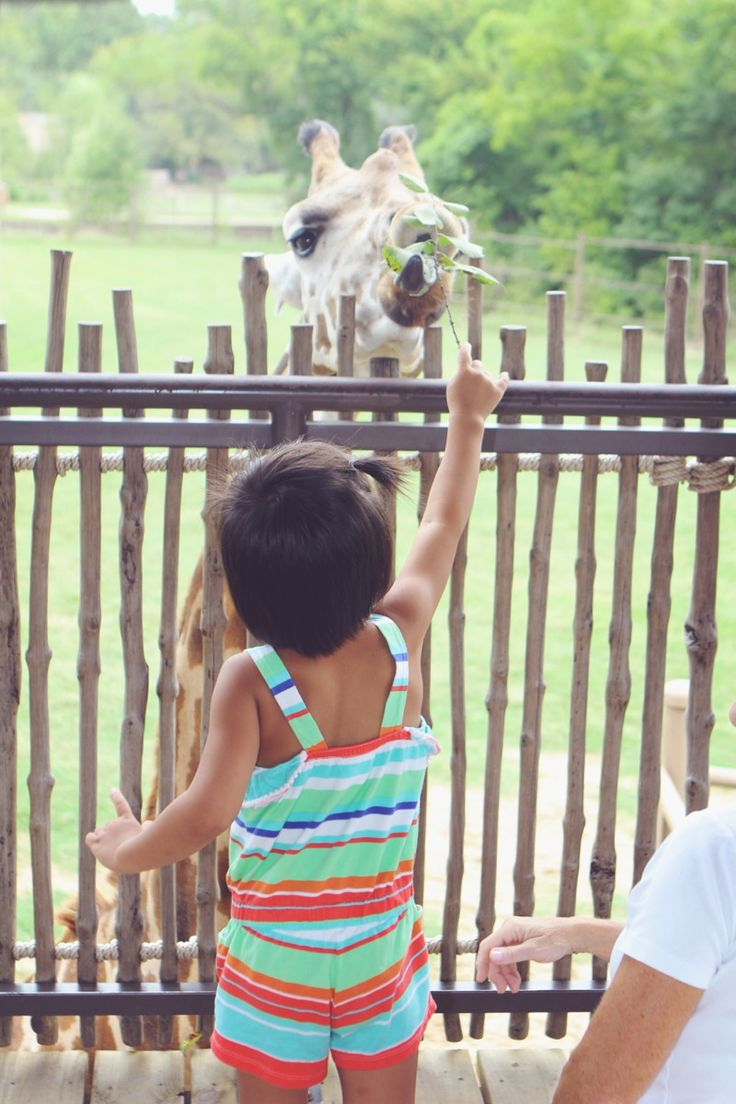 18 best Tulsa zoo images on Pinterest The zoo Zoos and Lent
