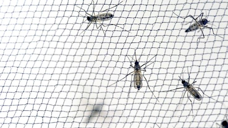 Bed nets have cut the spread of malaria, but mosquitoes are evolving resistance to them by changing their behavior.