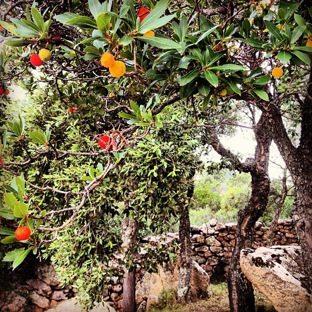 Corbezzolo e granito...made in  #sardinia #sardegna #autumn  @quintomoro- #webstagram