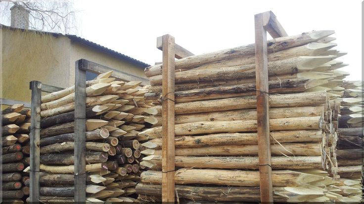 Entrindetes Akazienholz, Rundholz, natur, wie gewachsen