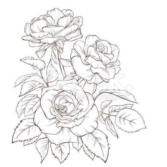 Contour Line Drawing Flowers : Rose bouquet vintage card vector art hand drawn and