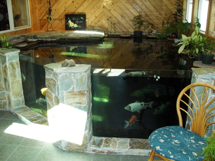 Worlds largest home fish tanks dream aquariums for Koi pond in house