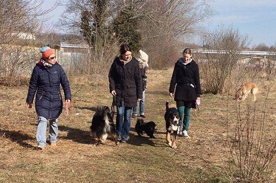 Hundespaziergang Mit Artgenossen Hundespaziergang Hunde