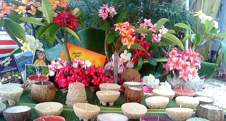 Hawaiian Sand Candles,Plumeria Cuttings, Plumeria seeds, Candy,Snacks,Jewlery,Coffee & Teas,Tropical Jams & Jellies and many more Gifts.