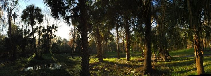 Peace River Campground in Wauchula, Florida is a Thousand Trails' membership campground in Hardee County in Central Florida, an hour from Tampa, and only about ninety milesfrom Orlando. We w…